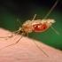 भोपाल में अब डेंगू व मलेरिया का खतरा
